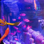 Carnevale e World Wildlife Day a Gardaland Sea Life Aquarium